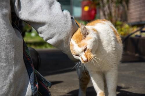 挨拶をしにくる猫
