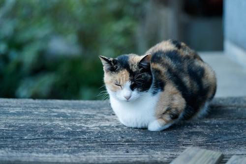 ベンチの上で眠る三毛猫