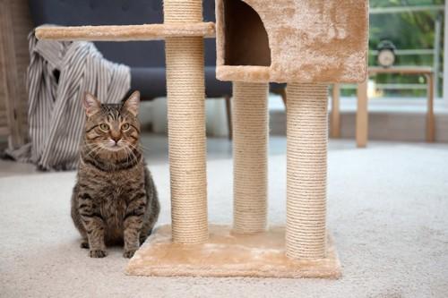 キャットタワーの横で座っている猫