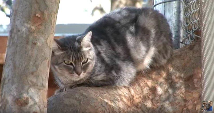 木の枝に座る猫