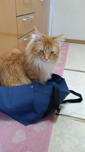 紺色のバッグに入る猫