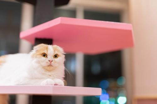 タワーで安らいでいる猫