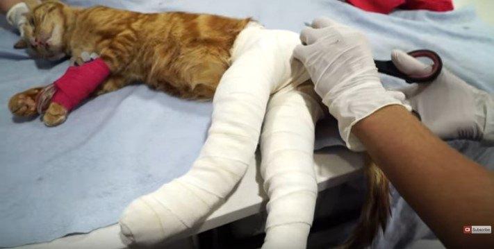 両足をテーピングされた猫