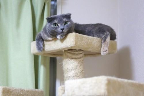 キャットタワーで留守番する猫