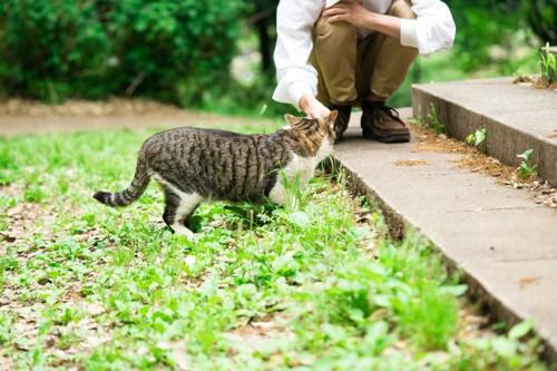 猫を撫でる男性