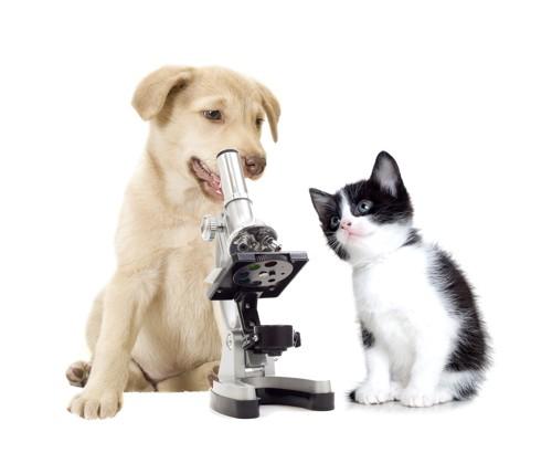 顕微鏡を覗く犬とそれを見つめる子猫