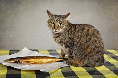 焼き魚と猫