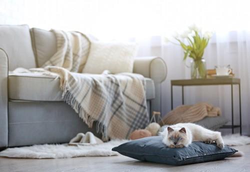 リビングに置かれたクッションの上で過ごす猫