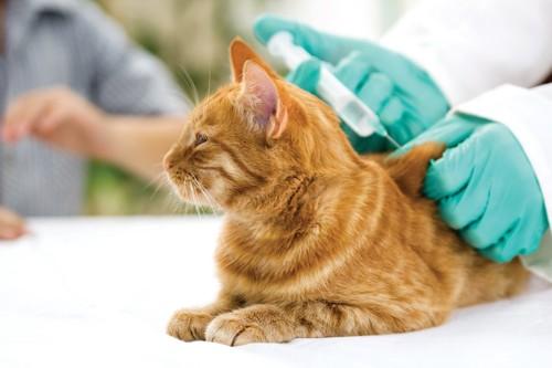 病院でワクチンを接種する猫