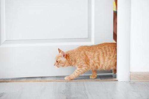ドアから出入りする猫