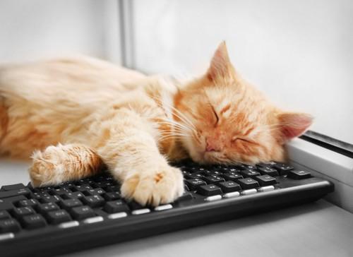 パソコンのキーボードの上で眠る猫