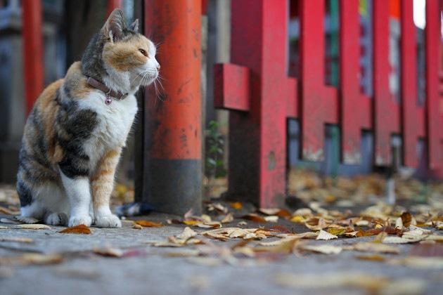 神社と三毛猫