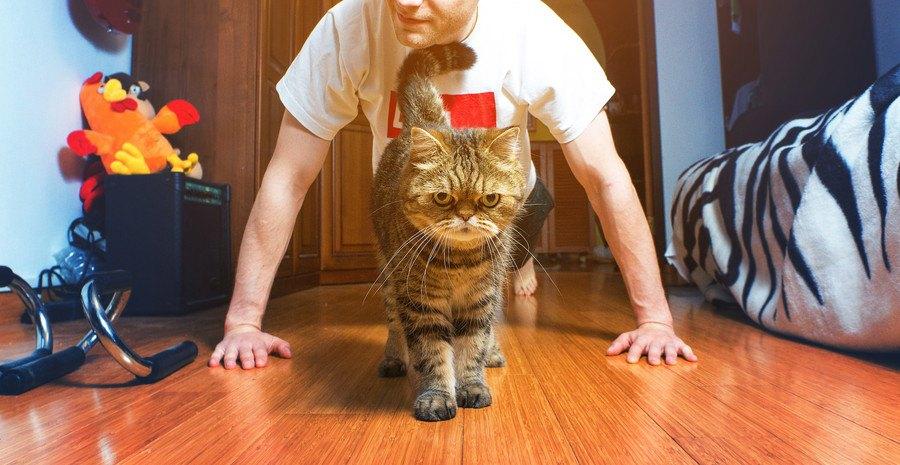 腕立て伏せをする男性と猫