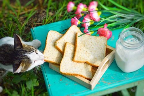 パンを食べる猫