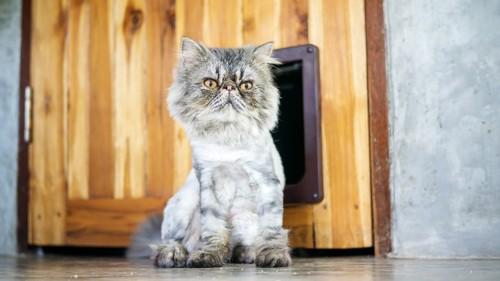 ドアから移動する猫