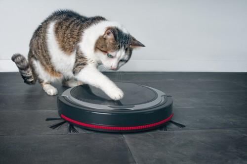 ロボット掃除機とじゃれる猫