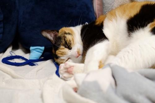 ぐったり寝る猫