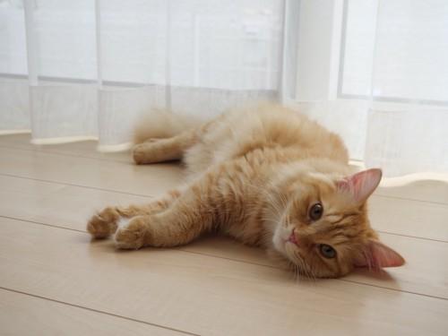 窓辺の床に寝転がる猫