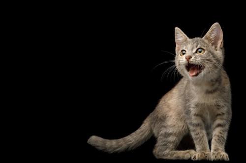 飼い主さんを探す猫