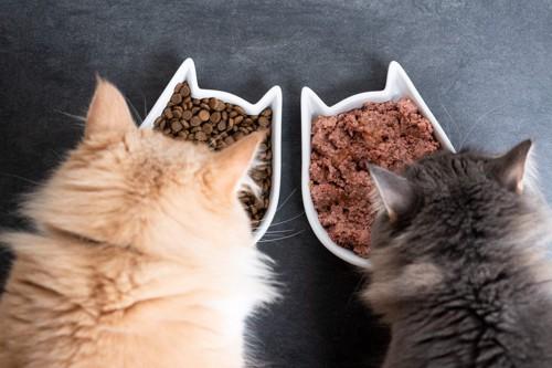 猫型のフードボウルと2匹の猫