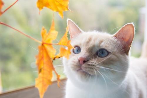 秋を感じる猫