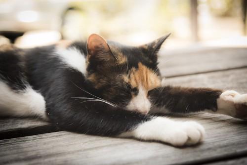 暑くてぐったりしている猫
