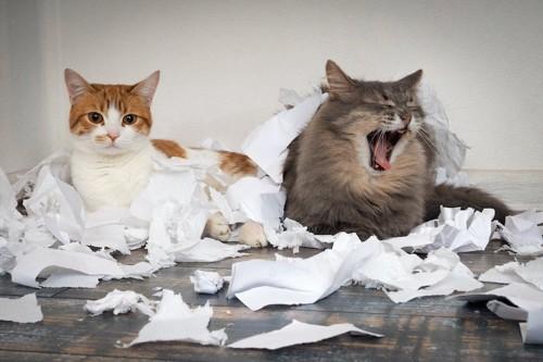 紙くずを散らかした2匹の猫たち