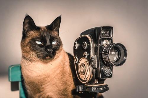 猫と古いカメラ