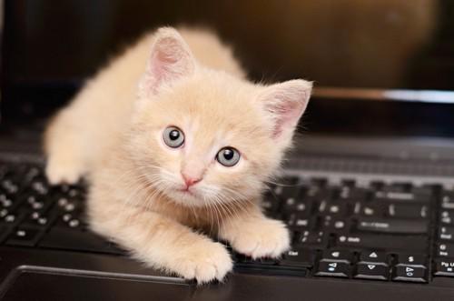 キーボードの上の猫