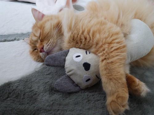 ぬいぐるみを抱きながら眠る猫