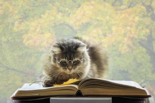 開いた本の上の猫