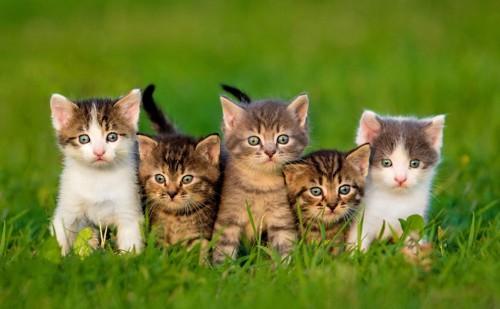 5匹で整列している子猫たち