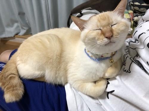 飼い主の膝の上で気持ちよさそうに眠るコマちゃん