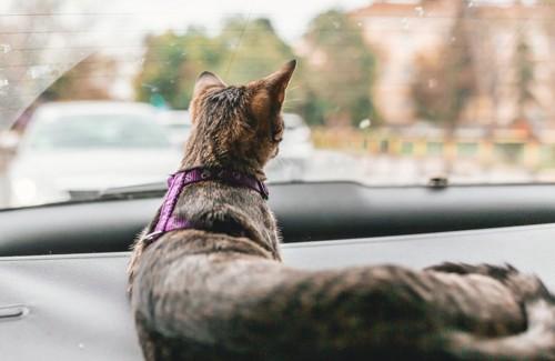 車に乗っている猫の後ろ姿