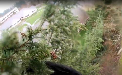 猫が立ち往生する木