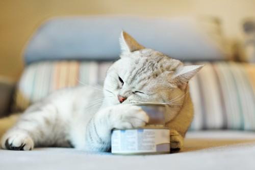 缶詰にメロメロな猫