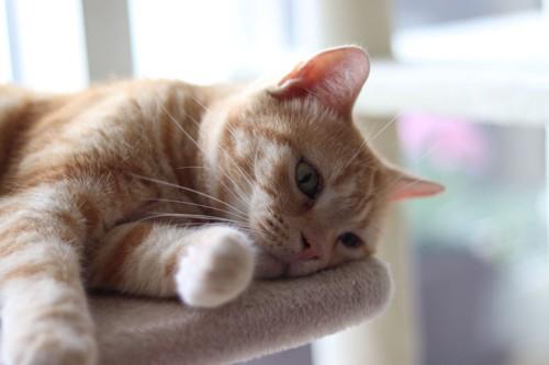 キャットタワーで寝ている猫