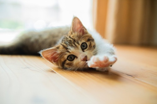 おねだりしている猫