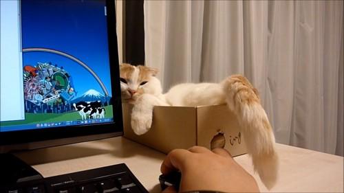 パソコン横の薄目の猫