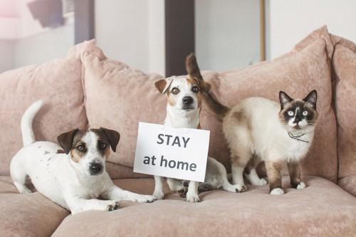 ステイホームのカードを掲げる3匹の犬