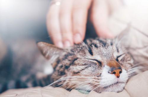 抱かれて頭を撫でられる猫