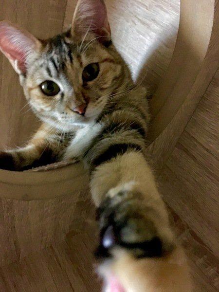 片手を伸ばしている猫の横顔