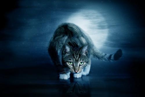 闇夜の中で動き回る猫