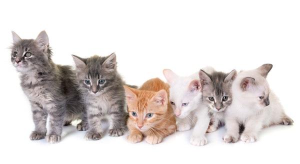 いろいろな種類の子猫