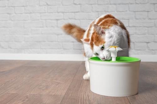 自動給水器から水を飲む猫