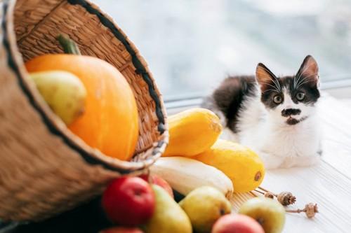 野菜を眺める猫