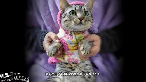 前足を持たれる猫