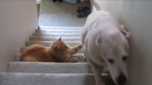 おしりを叩く猫