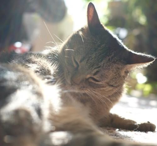 奇跡のような神々しさの猫