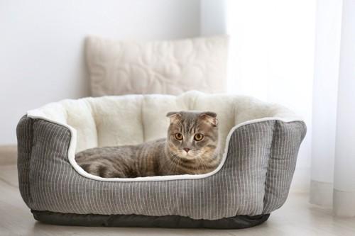 猫ベッドに入っている猫